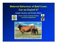 Maternal Behaviour of Beef Cows: Can we Exploit it?