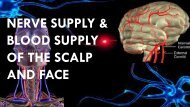 NERVE SUPPLY & BLOOD SUPPLY OF THE SCALP AND FACE