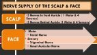 NERVE SUPPLY & BLOOD SUPPLY OF THE SCALP AND FACE - Page 3