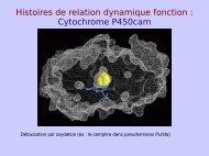 2c-RMN - LISM