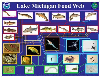 Lake Michigan Food Web