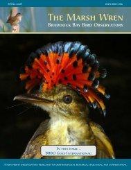 Spring 2008 - Braddock Bay Bird Observatory