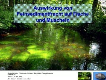 Auswirkung von Feinsedimentfracht auf Fische und ... - Wanderfische