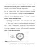 ESTABILIDAD DE LAS DISPERSIONES COLOIDALES - Page 5