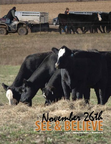 See & Believe Female Sale - Dwyer Cattle Services