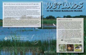 Wetlands in the Texas Blackland Prairie - Trinity Waters