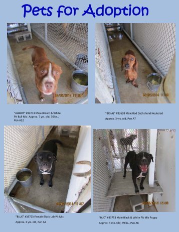 Pets for Adoption