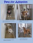 Pets for Adoption - Page 2