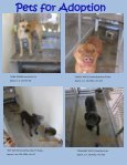 Pets for Adoption - Page 3