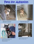 Pets for Adoption - Page 4