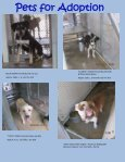 Pets for Adoption - Page 5