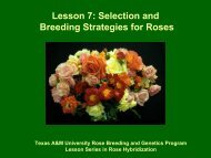 Selection and Breeding Strategies for Roses - Aggie Horticulture ...
