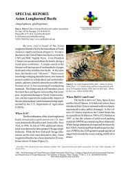 SPECIAL REPORT: Asian Longhorned Beetle - Invasive.org