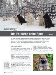 Die Fellfarbe beim Spitz Teil 4/4 - Liebhaber des Deutschen Spitzes ...