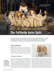 Die Fellfarbe beim Spitz Teil 3 - Liebhaber des Deutschen Spitzes eV