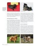 Die Fellfarbe beim Spitz Teil 3 - Liebhaber des Deutschen Spitzes eV - Seite 3
