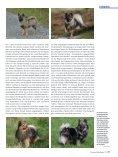 Die Fellfarbe beim Spitz Teil 3 - Liebhaber des Deutschen Spitzes eV - Seite 4