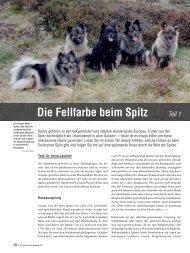 Die Fellfarbe beim Spitz Teil 1 - Liebhaber des Deutschen Spitzes eV