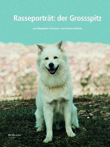 Rasseporträt: der Grossspitz - Liebhaber des Deutschen Spitzes eV