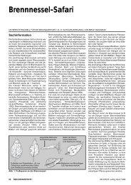 Brennnessel-Safari - BIOLOGIE