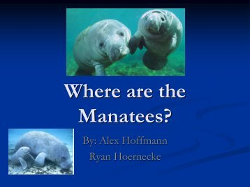 Where are the Manatees?
