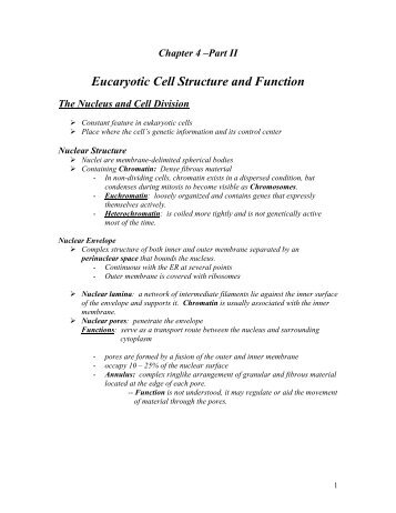 Chapter 7 Cell Structure And Function Chapter Vocabulary Review