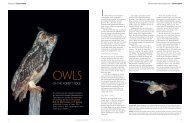 Owls of the forest's edge - Ashoka Trust for Research in Ecology and ...