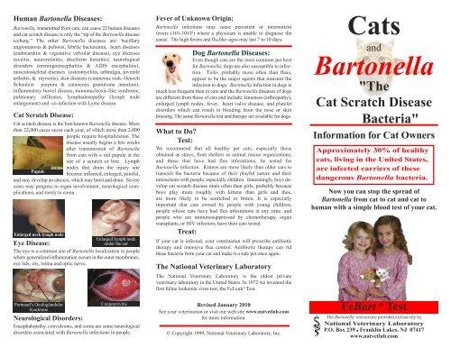 Cats Bartonella - National Veterinary Laboratory, Inc
