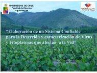 FIA fitoplasmas.pdf - Universidad de Chile