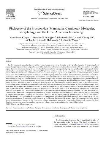 Phylogeny of the Procyonidae (Mammalia: Carnivora): Molecules ...