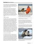 Killer Whale: - Orca Network - Page 7