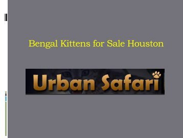 Bengal Kittens for Sale Houston