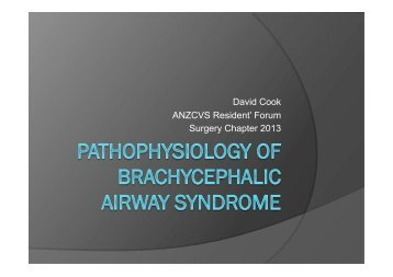 Pathophysiology of Brachycephalic Airway Syndrome