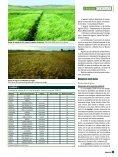 cereal de invierno - GENVCE - Page 5