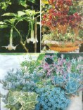 Page 1 Page 2 LANDSCAPE DESIGN BY JUDY M. HORTON ... - Seite 6