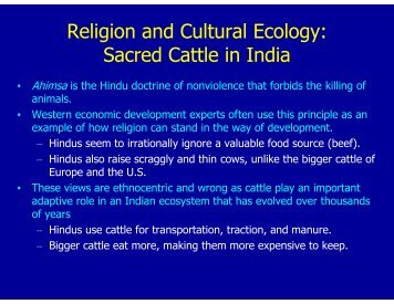 Religion and Cultural Ecology: Sacred Cattle in India