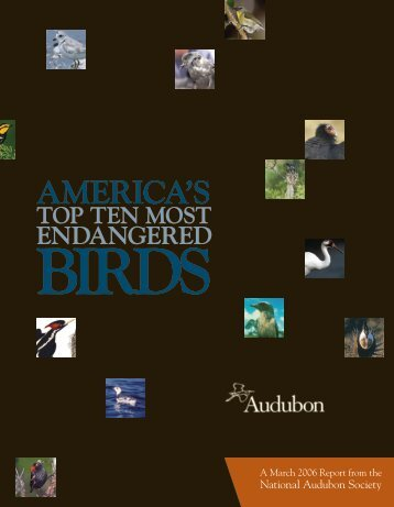 Top 10 Endangered Birds report - National Audubon Society