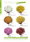 2013 Multiflora & Aster Assortment - Page 2