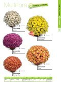 2013 Multiflora & Aster Assortment - Page 5