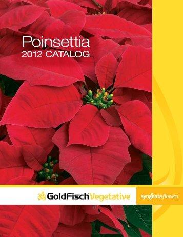 2012 Poinsettias