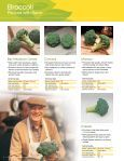 Syngenta Vegetables - Page 6