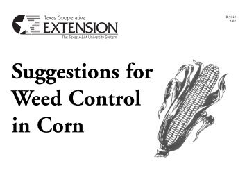 Suggestions for Weed Control in Cotton - Texas Variety Testing ...