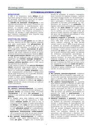 CITOMEGALOVIRUS (CMV) - Sezione di Microbiologia