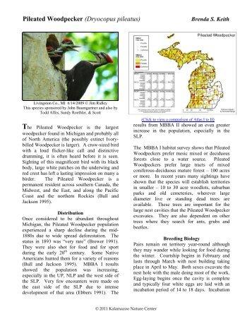Pileated Woodpecker - Michigan Breeding Bird Atlas Website