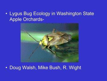 • Lygus Bug Ecology in Washington State Apple Orchards- • Doug ...