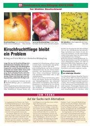 Kirschfruchtfliege bleibt ein Problem (283 KB)