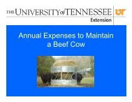 Annual Beef Cow Cost - UT Extension