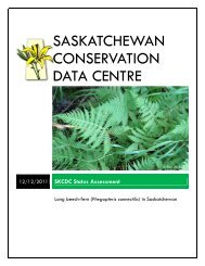 Phegopteris connectilis - Saskatchewan Conservation Data Centre