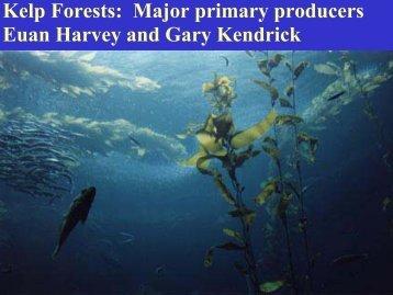 Kelp Forests - The University of Western Australia