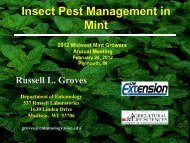Insect Pest Management in Mint